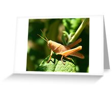 Happy Grass hopper Greeting Card