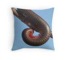 American Giant Millipede (Narceus americanus) 20D0021024 Throw Pillow