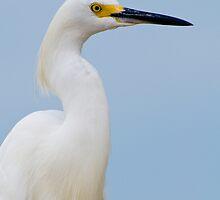 Snowy Egret Profile by Bonnie T.  Barry