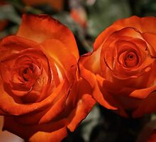 Roses @ home (simple joy of life) by mrg72