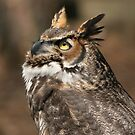 Great Horned Owl (Bubo virginianus) 20D0034757 by Cristian