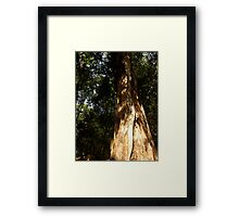 Wise Tree Framed Print