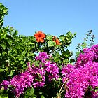 Flowers - Caribbean Island - 4 by ouellettep