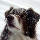 Snowface by Anne Smyth