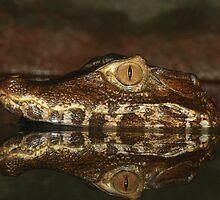 Crocodile baby 40D0017207 by Cristian