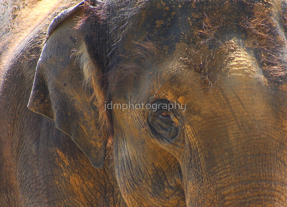 Asian elephant abstract...... by jdmphotography