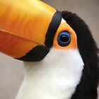 Toucan play at that by Laura Kelk
