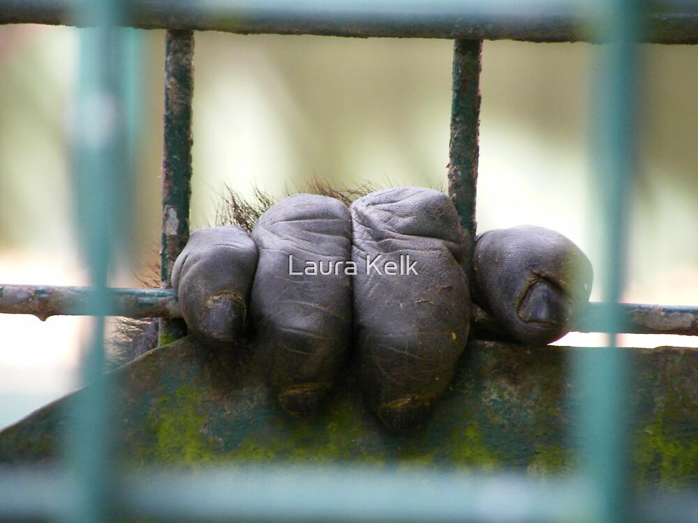 Gorrilla, Caged by Laura Kelk