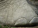 Elephant Toes by Laura Kelk