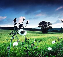 seeds,clouds,tree and barley by colin campbell