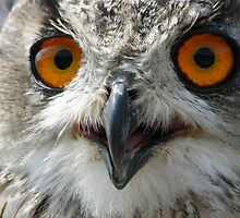 Eagle-owl by Laura Kelk