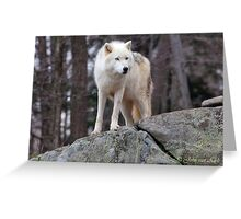 Arctic wolf on hunt  Greeting Card
