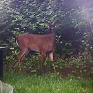 Look Who Came to the  Cookout by crazyhorse557