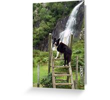 Indy at Aber Waterfalls Greeting Card
