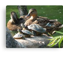 Wildlife in All Sizes Canvas Print