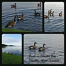 Collage of Duck Photos by WeeZie