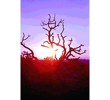 Sunset through Silhouetted Tree in Desert (1) Photographic Print
