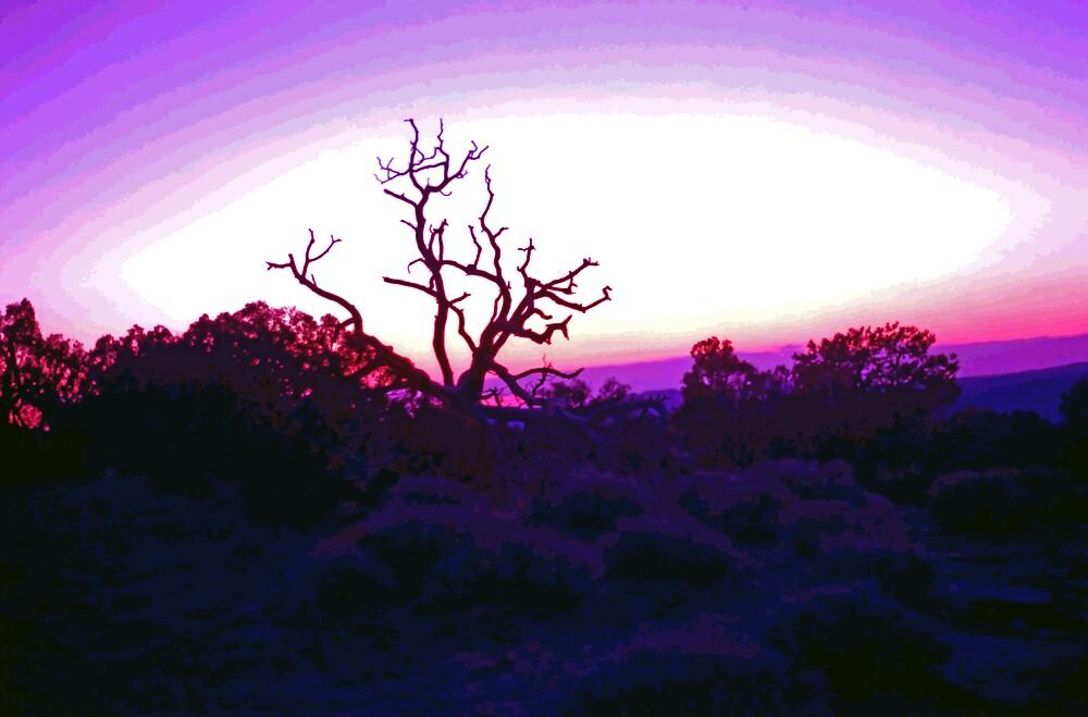 Sunset through Silhouetted Tree in Desert (2) by SteveOhlsen