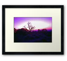 Sunset through Silhouetted Tree in Desert (2) Framed Print