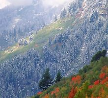 Mt. Timpanogos w/ Fall Color and Fresh Snow - 834 views by SteveOhlsen