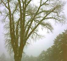 Foggy Morning Winter Landscape (9) by SteveOhlsen