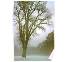 Foggy Morning Winter Landscape (9) Poster