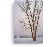 Foggy Morning Landscape (13) Canvas Print