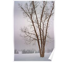 Foggy Morning Landscape (13) Poster