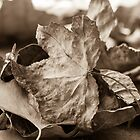 Textured Sepia by Lynn Gedeon