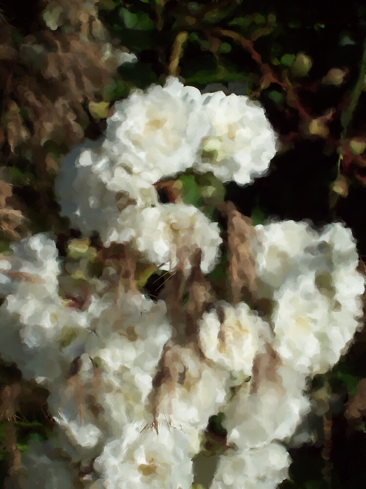 White roses and grass by Michelle BarlondSmith