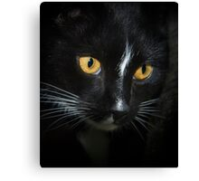 I Never touched da budgie... right.... Canvas Print