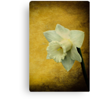 Pure as springtime Canvas Print