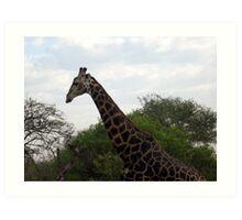 Giraffe in Kruger National Park Art Print