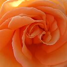 Peach Treat by Nikki Collier