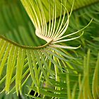 Cycad by pollly