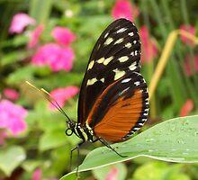 butterfly 3 by MJjunkie86