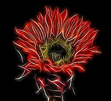 Neon Red Sunflower by Judy Vincent