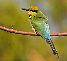 Rainbow Bee-eater ~ The Spectrum by Robert Elliott