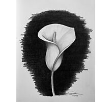 1 Hour Sketch - Lily Photographic Print