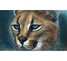 Lynx in pastel land Photographic Print
