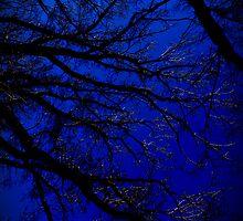 Blue darkness by Matthew  Hornsby