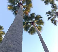 Palm trees by Windpig