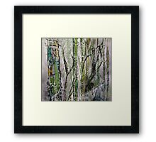 Bamboo in Water #5 Framed Print
