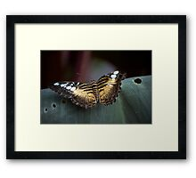 Why! I am a beautiful butterfly... Framed Print