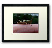 Finger Hopper Framed Print