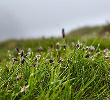 Grass and buds with morning dew by naturalis