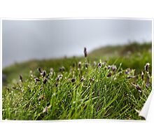 Grass and buds with morning dew Poster