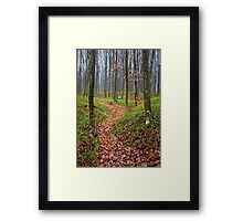 Forest alley Framed Print