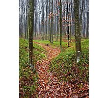 Forest alley Photographic Print