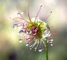 Droplets by Ian Berry